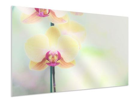 XXL Stoffbild Lovely Orchidee